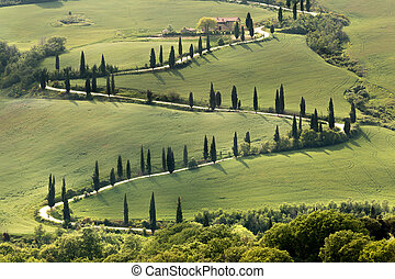 Cypresses along a curving road in Tuscany near Al Foce