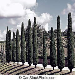 Hill of Tuscany with Vineyards and Cypresses, Vintage Style Toned Picture