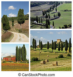 cypresses in wonderful tuscan countryside - collage