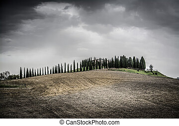 Cypresses on a small hill under a cloudy sky in Tuscany