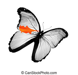 Cyprian flag butterfly flying, isolated on white background