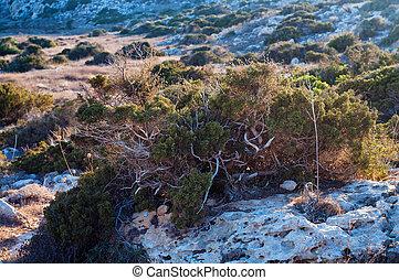 Cyprian wild rocky landscape, bush and grass on rocks