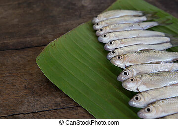 Cyprinidae or Silver barb is in the freshwater fish to ...