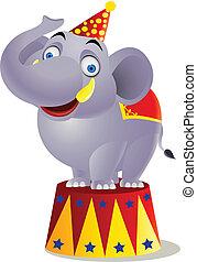 cyrkowy słoń