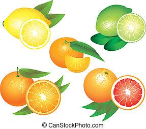 cytrus, wektor, komplet, owoce