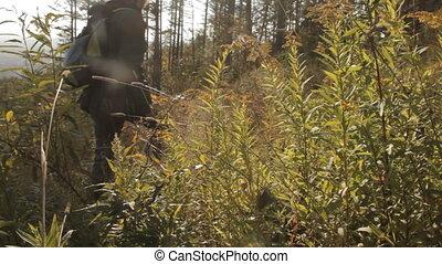 człowiek, promienie, sub-, plamy, plecak, sosna, zaświecić, środek, aparat fotograficzny, las, słońce, lens., chwilowy, sędziwy, góry., zmontowanie, broda