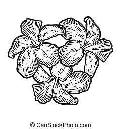 czarnoskóry, ręka, biała deska, drapać, imitation., kwiaty, ...