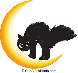 czarny kot, na, księżyc