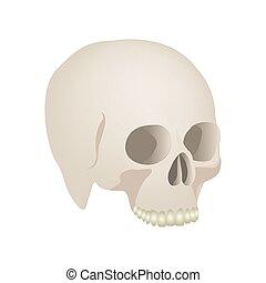 czaszka, realistyczny, ludzki, prospekt, bok, ikona