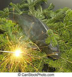 Czech Christmas tradition (Christmas carp)