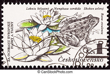 Czechselovakian Postage Stamp Edible Frog, Pelophylax ...
