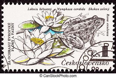 Czechselovakian Postage Stamp Edible Frog, Pelophylax ...