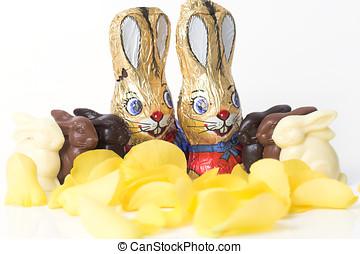 czekolada, wielkanoc, parada, królik