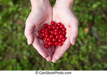 czerwone jagody, samica, viburnum, siła robocza