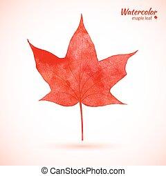 czerwony, akwarela, klon, leaf.