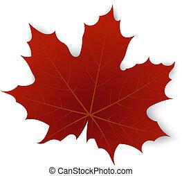 czerwony klonowy liść, na, niejaki, białe tło