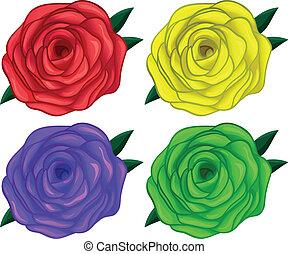 cztery, barwny, róże