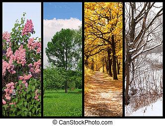 cztery pory, wiosna, lato, jesień, zima drzewa, collage, z, brzeg
