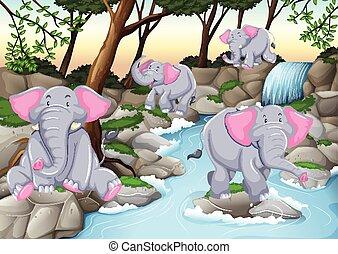 cztery, wodospad, słonie