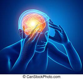 czuły, samiec, ból głowy