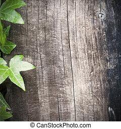 czysty, drewniany, tło, z, bluszcz, ułożyć, na, przedimek...