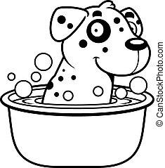 dálmata, caricatura, baño