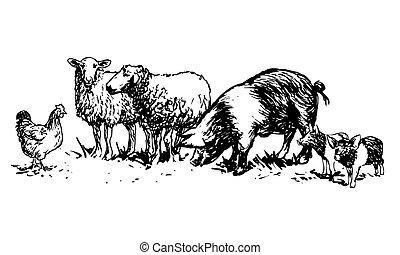 dát, živočichy, farma
