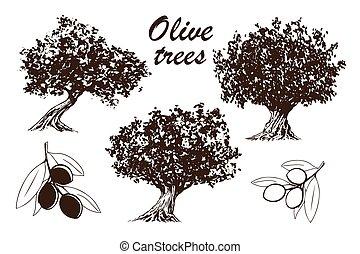 dát, kopyto, oliva, rukopis, nahý, osvětlení, strom, -