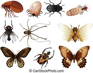 Hmyz Umeni Kresleni Lice Umeni Lice Ilustrace Hmyz Vektor