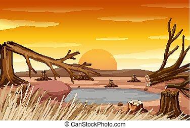 déboisement, coucher soleil, scène