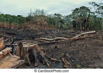déboisement, enregistrement, champs, bas, résultat, rainforest, étendu, brûlé