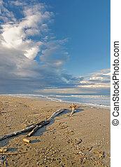 débris, plage