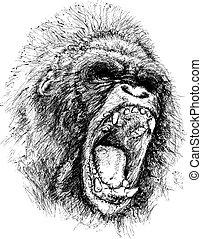 déchaînement, illustration, singe