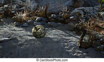 déchiré, sable, mensonges, jeté, balle, plage, mer, football...