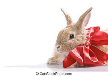 décoré, lapin