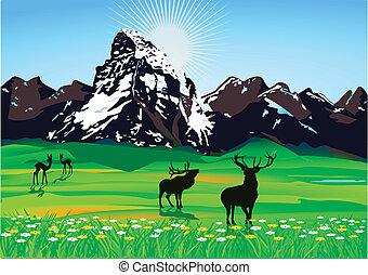 décor montagne, à, sauvage