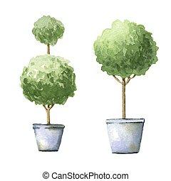 décoratif, arbres, pots.