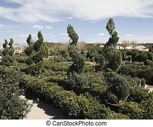 décoratif, buis, arbres