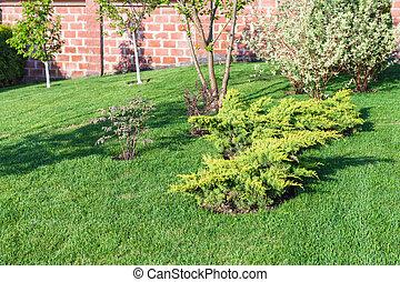décoratif, buissons, pelouse, arbres, manucuré