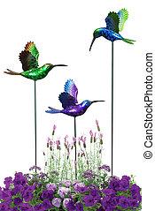 décoratif, colibris