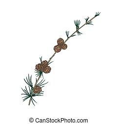 décoratif, conifère, arbre vert, feuillage, réaliste,...