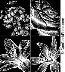 décoratif, ensemble, arrière-plans, fleurs, vector., hand-drawing.