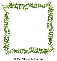 décoratif, eucalyptus, feuilles, cadre