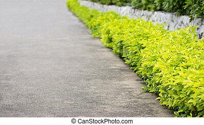 décoratif, plante, extérieur, trottoir, jardin