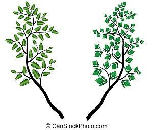 décoratif, silhouette, branche, -, feuilles, vecteur, arrière-plan vert, blanc