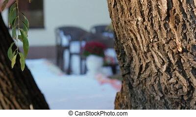 décoration, cérémonie, mariage