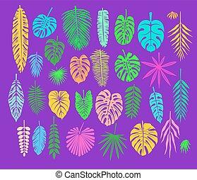 décoration, exotique, feuilles