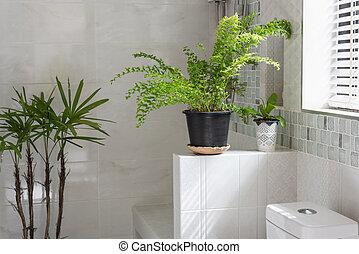 décoration, fougère, ou, frais, toilettes, salle bains, ...