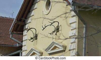 Ramure trophy chasse cornes ramure vieux cr ne for Decoration maison chasse