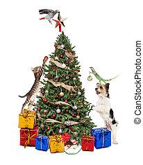 décorer, arbre, animaux familiers, noël